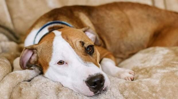 Беременную собаку выбросили на улицу, где бедняга родила ораву щенков