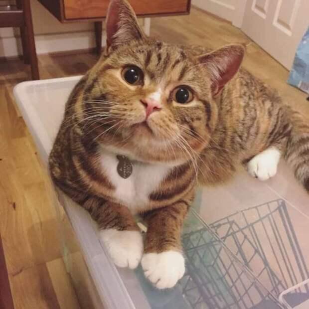 Кошке прислали анонимное признание в любви и фото