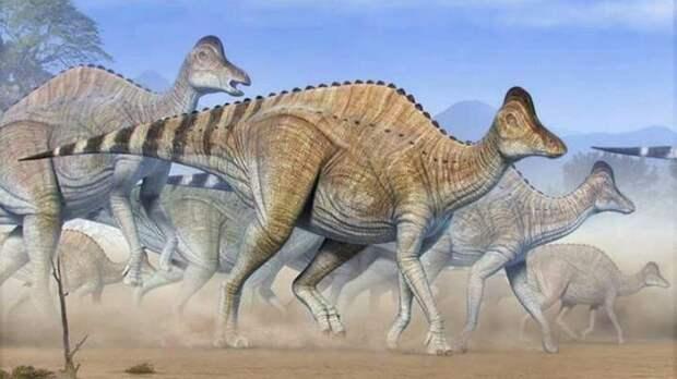 Первое обнаружение протеинов и ДНК динозавров ДНК, Парк Юрского Периода, Динозавры, Наука, Длиннопост