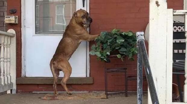 Пёс видел, как хозяева собирают вещи и уезжают… Он долго ждал у дверей их возвращения, питаясь объедками из мусорника