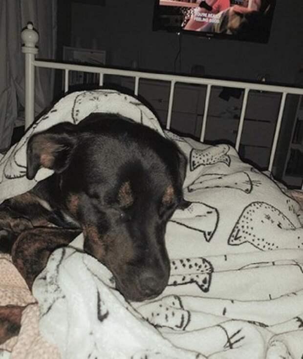 Собака в кровати
