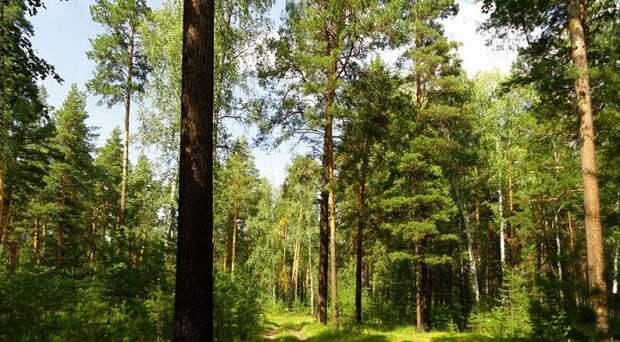 В Новосибирской области началось обсуждение создания парка «Караканский бор»