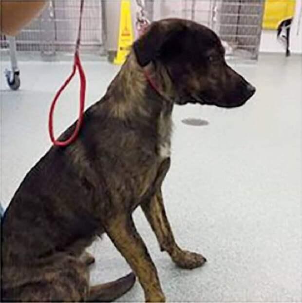 «А зачем ей врач?»: собаку сбила машина, но хозяйка не посчитала нужным обратиться к ветеринару