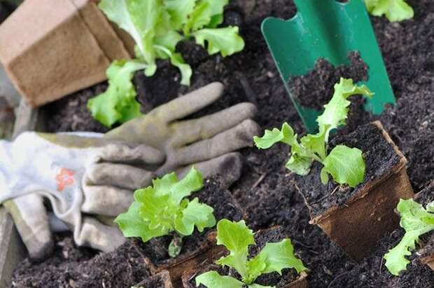 Растительные компоненты и вода. Делаем грунт для рассады
