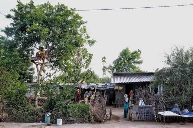 Больной ковидом индиец 11 дней прожил на дереве, чтобы не заражать родных
