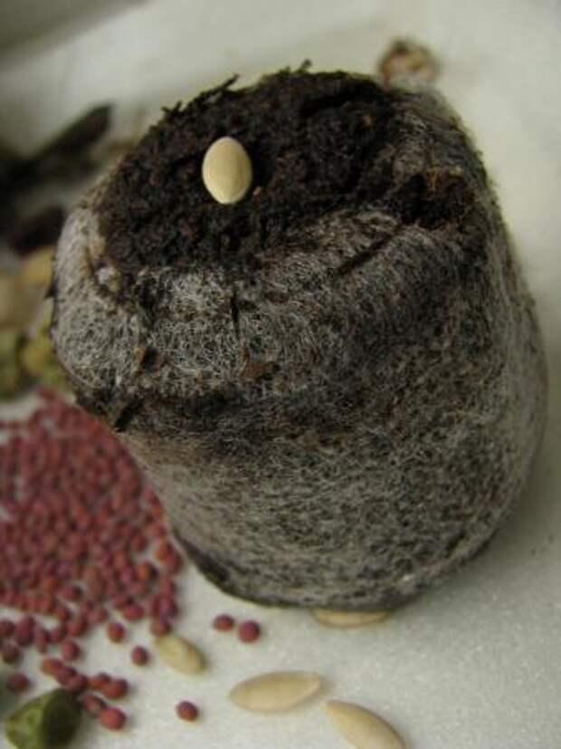 Таблетки идеально подходят как для выращивания дорогостоящих семян