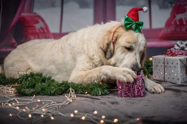 Составлен список худших подарков на Новый год