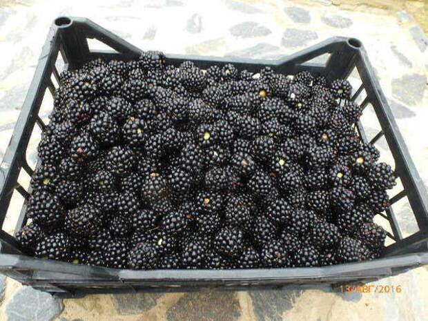 Вот такие ягоды я предлагаю своим покупателям