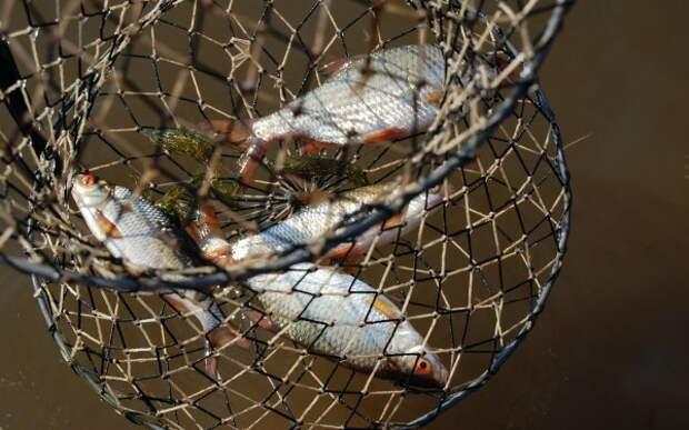 тара для зимней рыбалки