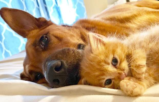 Доказательство того, что выражение — «как кошка с собакой», теряет свою актуальность