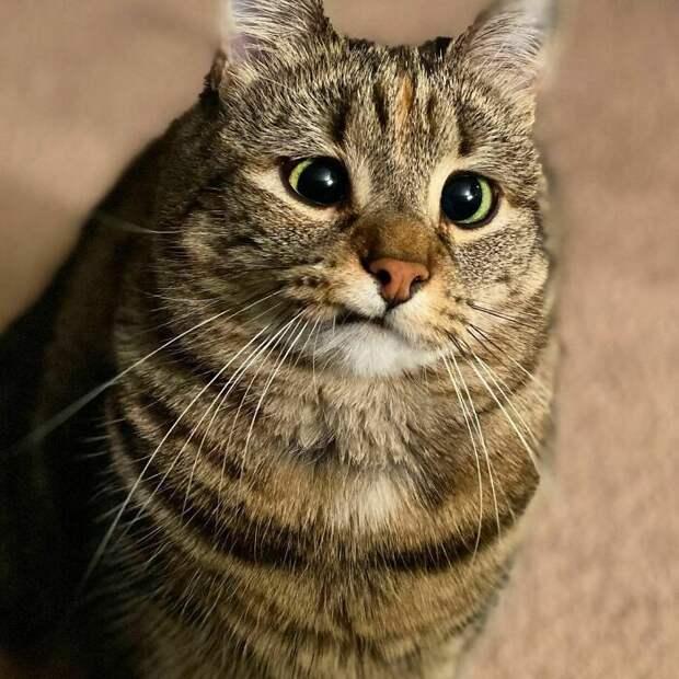 История кошки Олив Косоглазки доказывает — не бывает «неправильных» животных