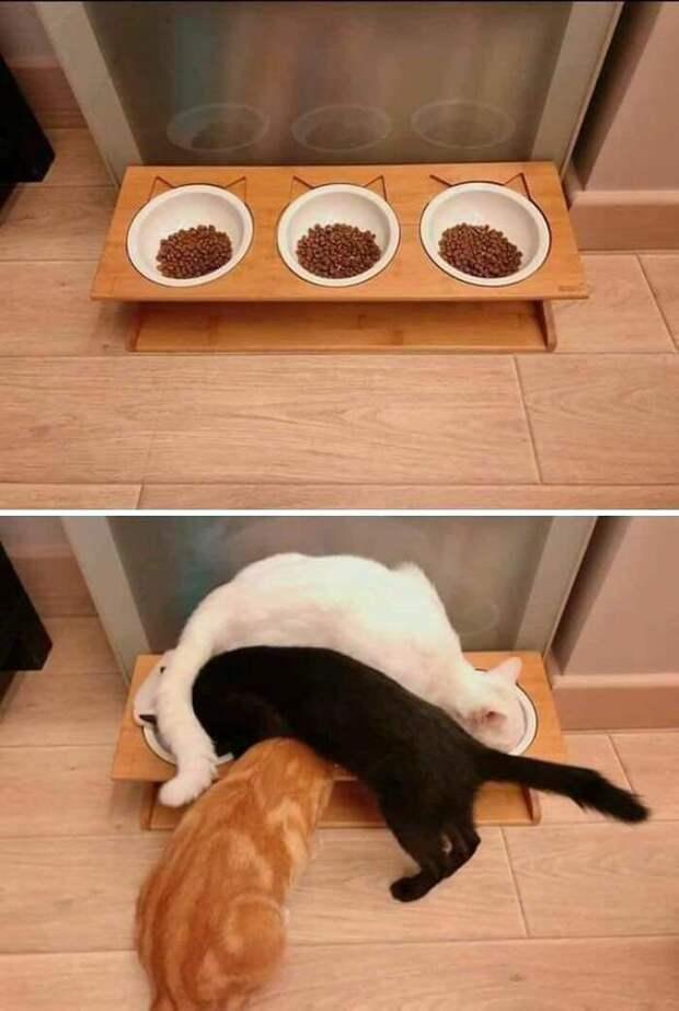 Каждый знает свое место животные, коты, смешные картинки, юмор