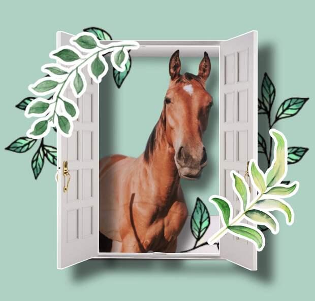 """Кто-то сказал """"лошадь""""?"""