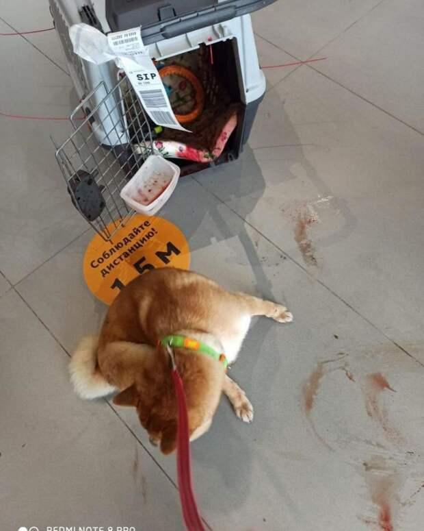 Собаке разбили мордочку на рейсе «Аэрофлота»