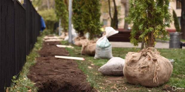 200 деревьев и кустарников посадят в районе Сокол осенью