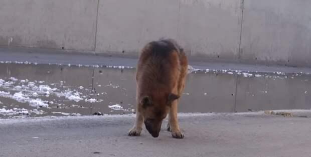 Мужчина подошел к голодной и истощенной собаке, когда он положил руку ей на голову, пес заплакал