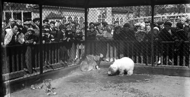 Зоопарк блокадного Ленинграда