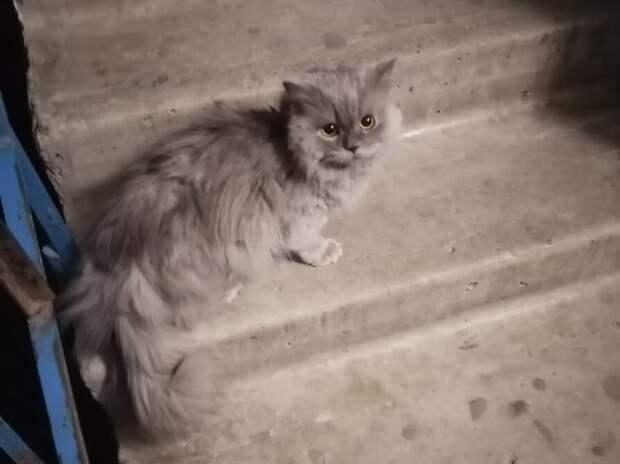 Котик сидел перед закрытой дверью и не мог понять, почему его не пускают домой…