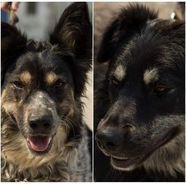 "На фото Дина (слева) и Мухтар (справа). Фото: центр защиты животных ""Бездомный пес""."