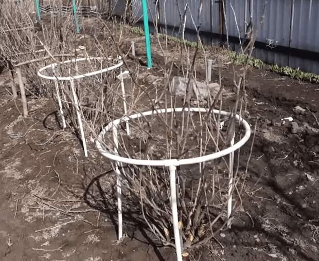 Не убиваемые подпорки для кустарников: полностью справляются с поставленной задачей