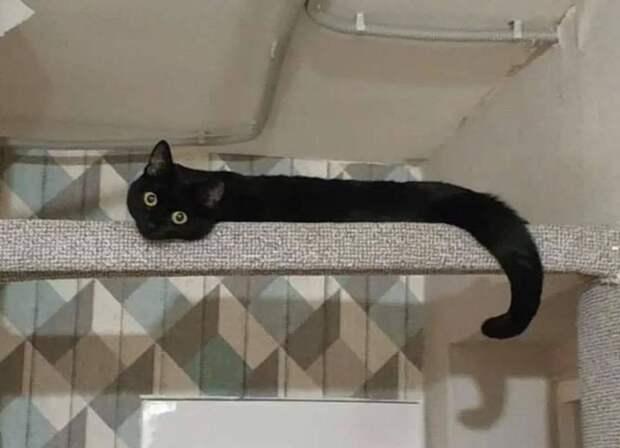 14 иллюзий с котами, которые запутают любого