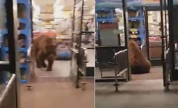 Медведь стащил пачку чипсов во время «налёта» на магазин (2 фото + 1 видео)