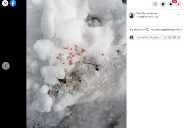 На Флотской и Лавочкина заметили следы отравителя собак