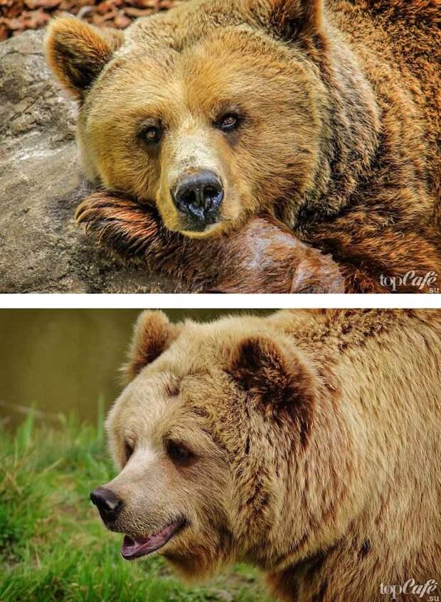 Самые красивые фото медведей