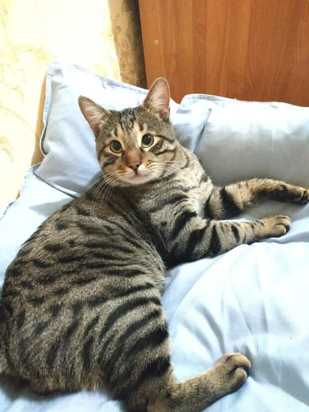 Испуганные кошачьи глаза смотрели на незнакомку. Кот был настроен агрессивно и не верил людям