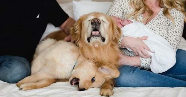 Собаке пришлось удалить глаза, но она нашла себе нового друга, теперь он указывает ей путь добро, друзья, животные, зрение, история, милота, собака