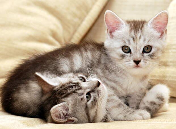 Фотография кот животное 2909x2127