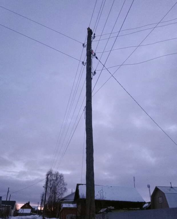 В Завьялово спасли кота, двое суток просидевшего на столбе линии электропередач