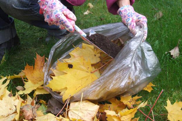 2. На листья насыпаем совок компоста.