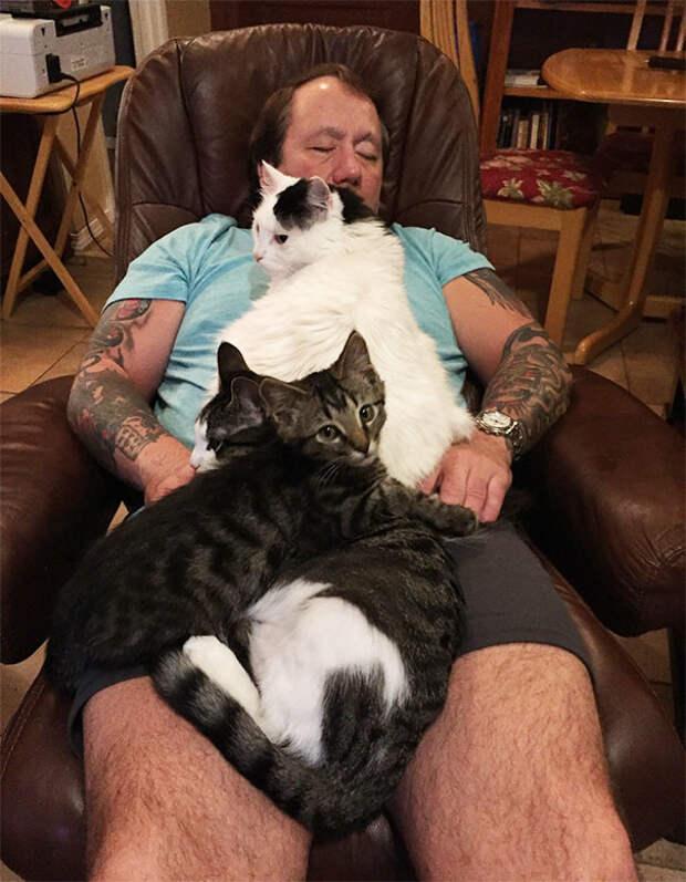 34. Кототерапия животные, жизнь, кот, питомец, семья, собака, фото