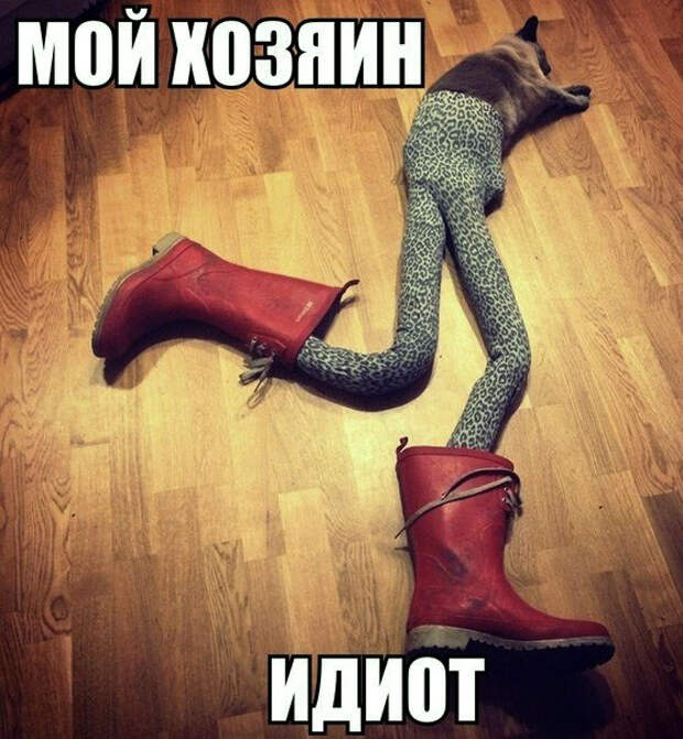 Котофейная тема ))
