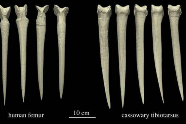 Оружие из костей: находка, которая испугала археологов