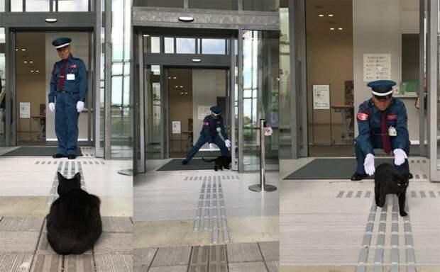 Делает он это с по-настоящему самурайским спокойствием животные, кот, кошки, милота, музей, япония