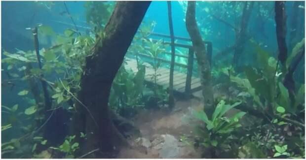 Лес ушел под воду и превратился в невероятный подводный мир