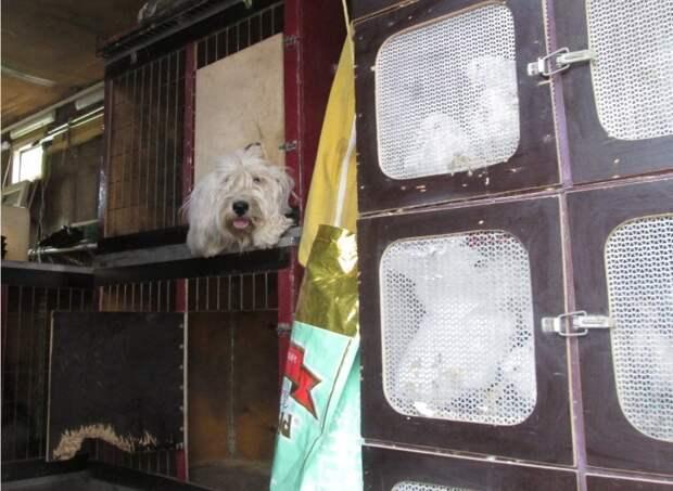 Владелицу животных из автофургона в Ижевске привлекли к административной ответственности