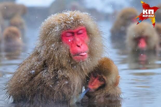 "Юрий Артюхин. ""Японская макака"". Фото: предоставлено организаторами"