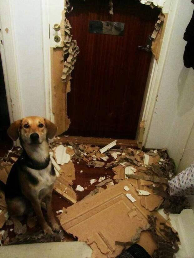 Собака сделал дырку в двери