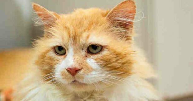 Кот возвращался… Он прошел 19 километров до дома, но его постигло разочарование!