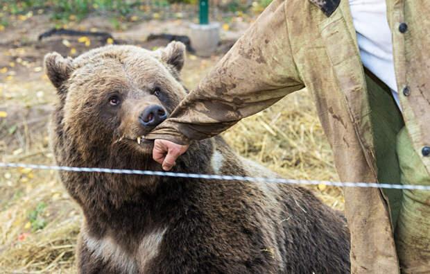Как медведь поселился на российском аэродроме вместе с летчиками