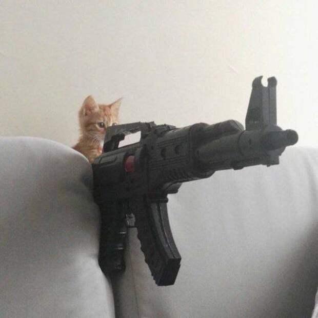 Котенок с винтовкой