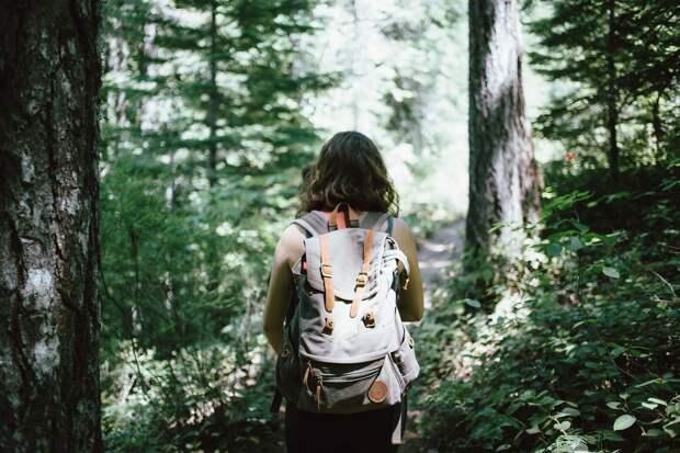 Леса Удмуртии откроют для посещения