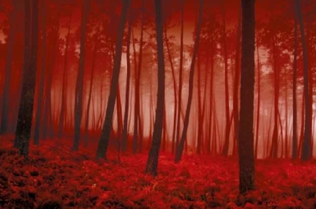 Берегитесь багрового тумана