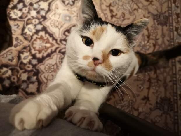 Пугливая кошка месяц не слезала со шкафа. Там она кушала, спала и справляла нужду…