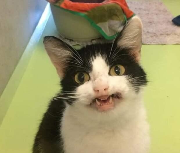 Кошка с «улыбкой» на мордочке ждет дом, которого у нее никогда не было