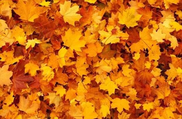 Отказаться от уборки листвы не получится – «Жилищник» Свиблова