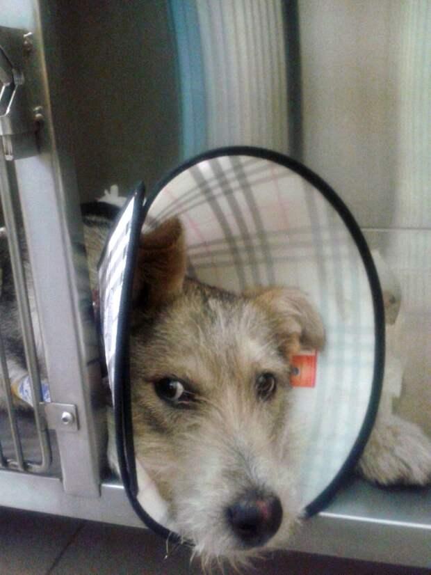 Мужчина 3 часа просидел на улице с раненой собакой на руках история, пес, собака, терьер